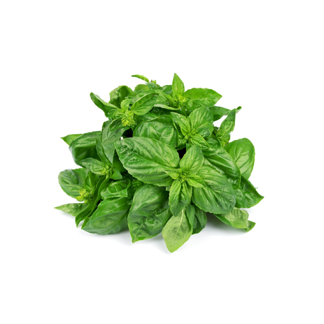 BASIL LEAVES (ريحان)