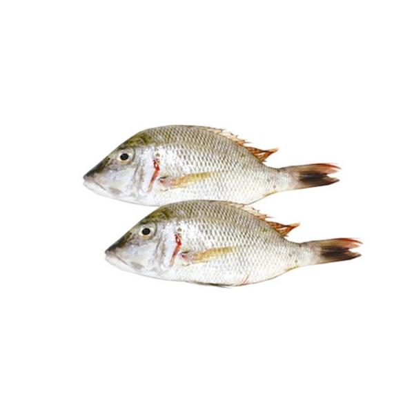 FISH SHARRY LARGE