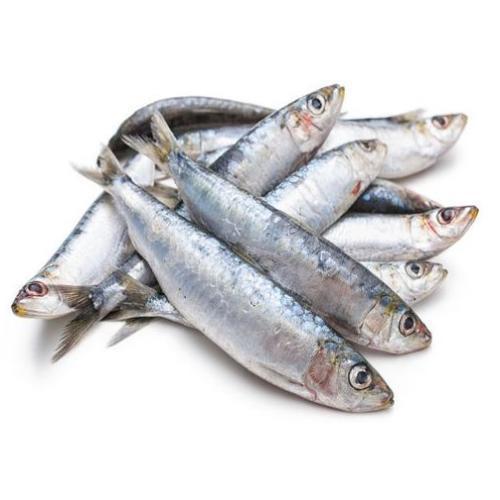 FISH SARDINE 1KG