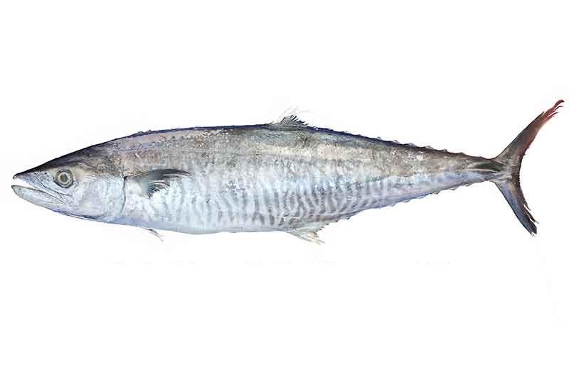 FISH KANAD 1KG
